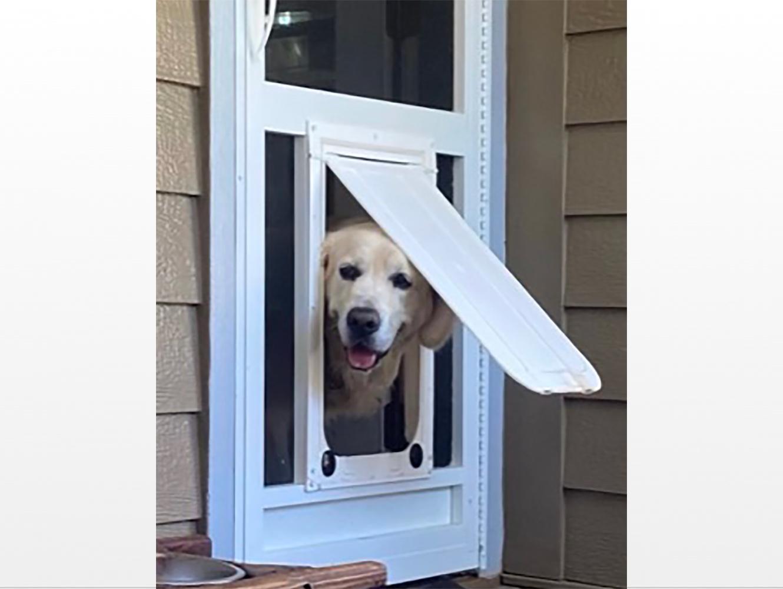 pet doors screen door with pet door dog