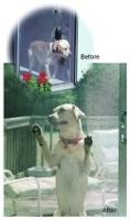 petscreendog reduced